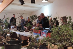 bonsai toulouges 008